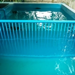 Turtle pool divider