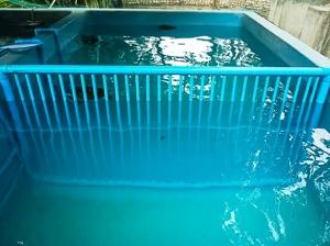 Turtle pool divider (Turtle Rescue & Rehabilitation Updates)