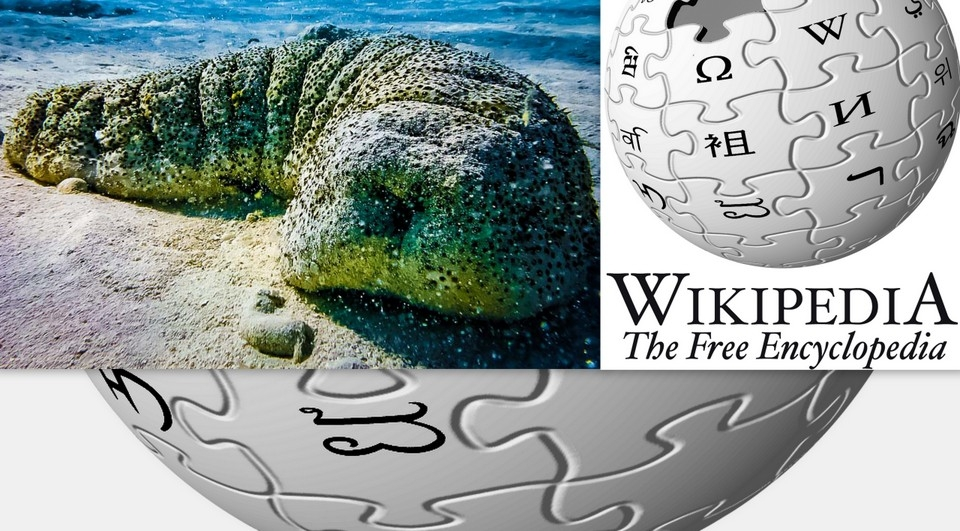 Our Wikipedia page – Marine Wildlife of Baa Atoll