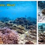 Landaa's Coral Frames, LG1195 (Nov 2011) & LG1943 (Nov 2013)