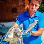 Lefty being examined by marine biologist Julien