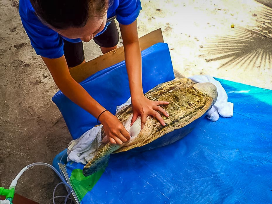 Adrelia - Airtrap on Ossy the Olive Ridley Turtle