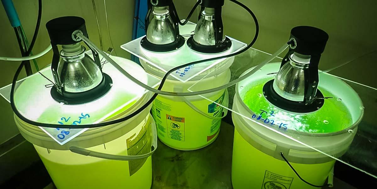 Fish Breeding Down In The Lab Four Seasons Resorts