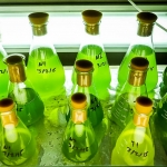 Fish Lab - batches of algae culture