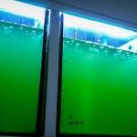 Fish Lab - indoor tanks of algae culture