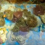Fish Lab - outdoor anemone tank