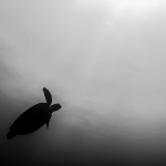 Green turtle silhouette