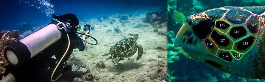 Maldives National Sea Turtle Identification Programme