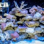 Marine Aquarium - newly redesigned