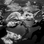 Mid-ocean turtle rescue