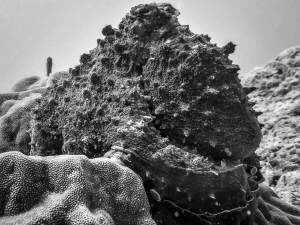Octopus on the Reef (Monochromatic Marine Magic)