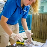 Beth's Marine Biology Blog - Turtle Care