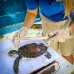 Beth's Marine Biology Blog - Turtle Monitoring
