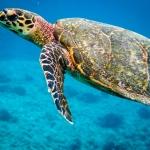 Beth's Marine Biology Blog - Turtle snorkel pic1