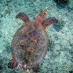 Beth's Marine Biology Blog - Turtle snorkel pic2