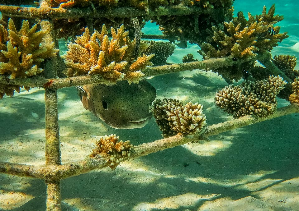 Reefscapers Coral Frame Updates - coral propagation and reef ...