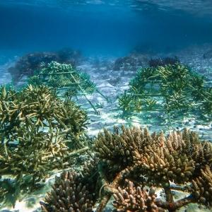 Reefscapers coral frame (Reefscapers Coral Frame Updates)