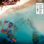 Reefscapers coral frames - Estate, Landaa Giraavaru