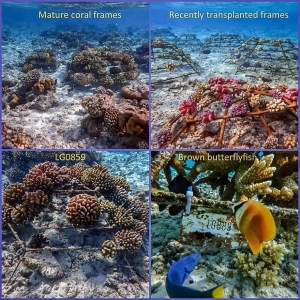 Reefscapers – coral frames at the Water Villas (Reefscapers Coral Frame Updates)
