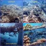 Reefscapers - various coral frames and marine life