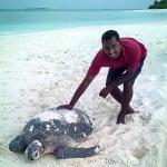 adult female turtle (photo sent to us)
