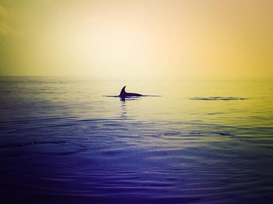 Pilot Whale, photographed on a beautifully calm day, Maldives