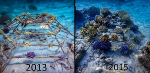 Reefscapers – coral frame 2009-2015 (Reefscapers News)