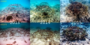 Reefscapers – coral frames (2013-2015) (Reefscapers News)