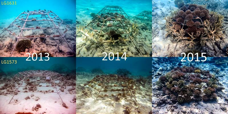 Reefscapers - coral frames (2013-2015)