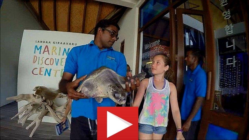 Sea Turtle Rescue & Rehabilitation at Landaa Giraavaru