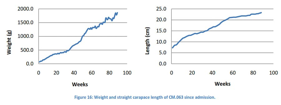 Turtle weight gain in CM063