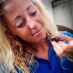 Cath's marine biology blog - hawksbill turtle hatchlings