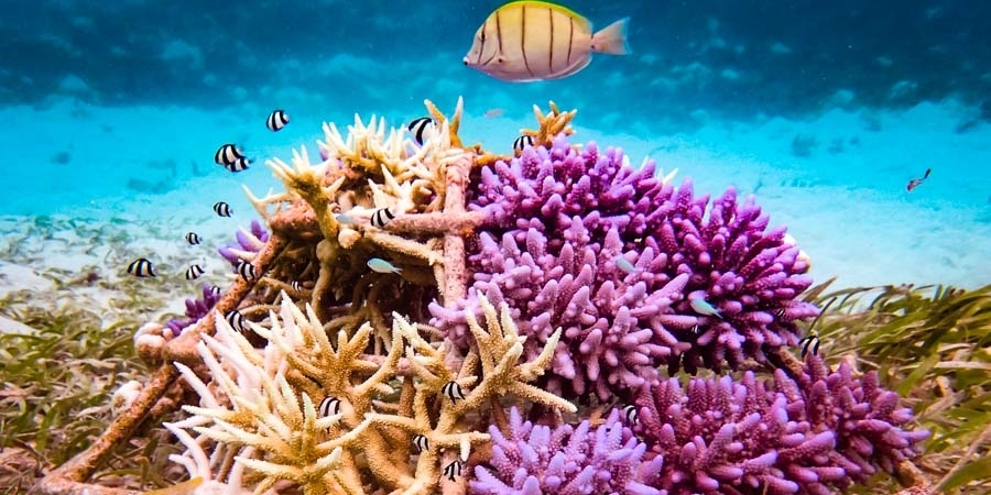 Reefscapers – Coral Propagation Experiments
