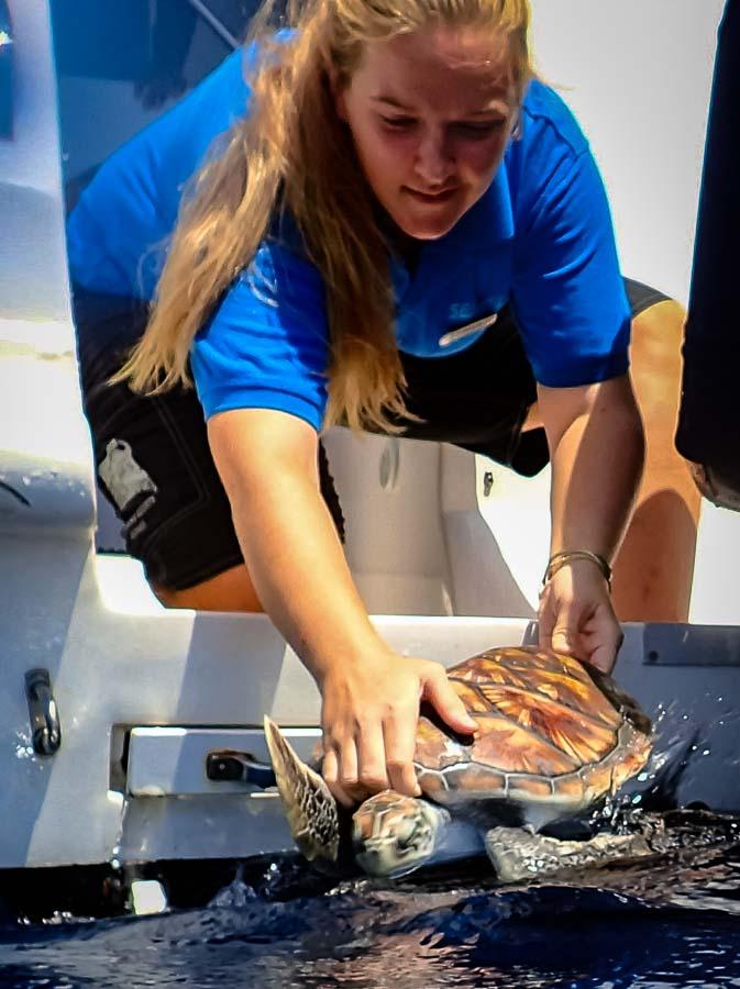 Releasing Vasya into the ocean