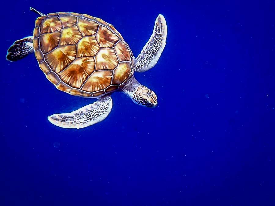 Vasya swimming free