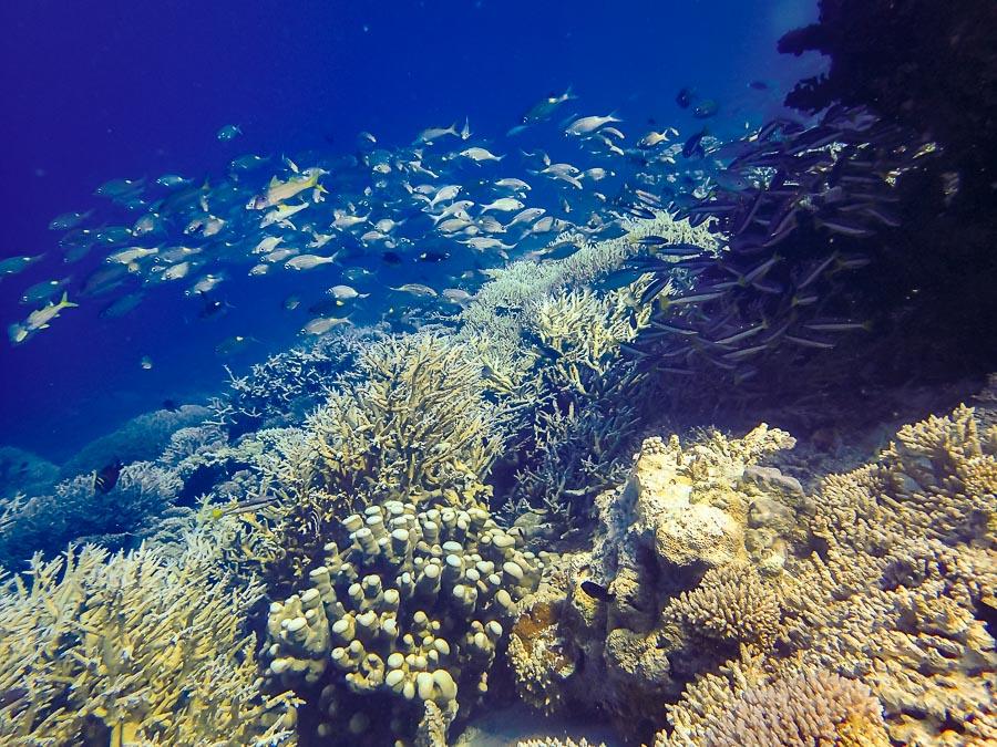 Coral Reef snorkel trip