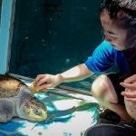 Marine Turtle Conservation [Seamarc Maldives Volunteers]