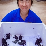 Turtle hatchlings [Seamarc Maldives Volunteers]