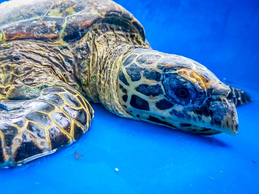 Updates from our Turtle Rescue Centres