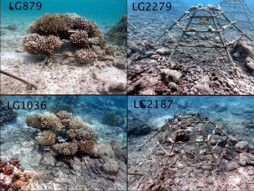 Coral frames at Water Villas [LG 2015.07]