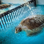 Kerry - rescue turtle, simulating environment