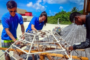 Seamarc Maldives – marine biology volunteers –  diving Reefscapers coral frames (Volunteering in the Maldives with Marine Savers)