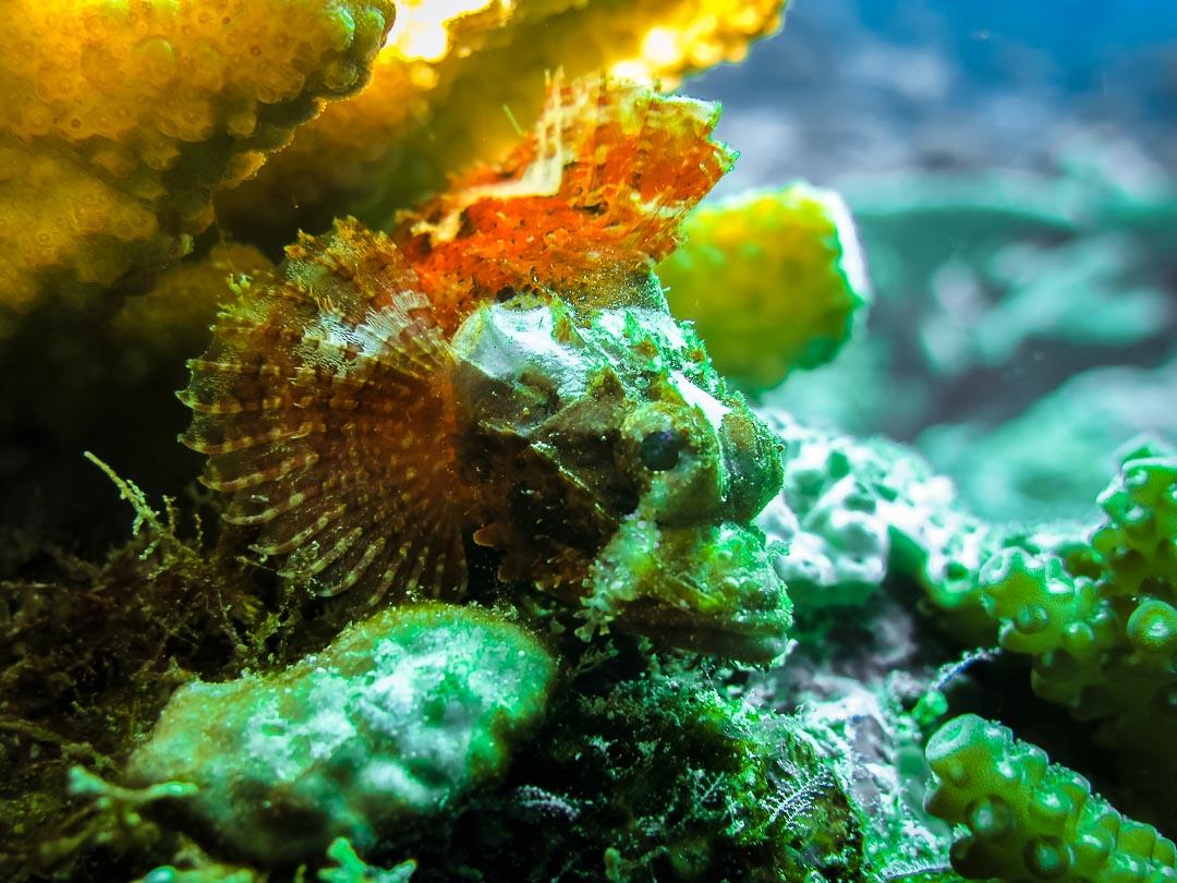 Seamarc Maldives marine biology volunteers and interns – Diving