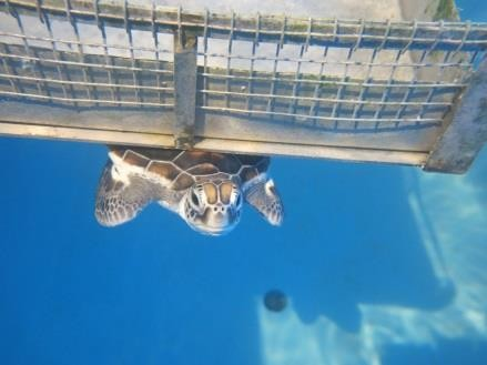 Turtle pools - enrichment activities