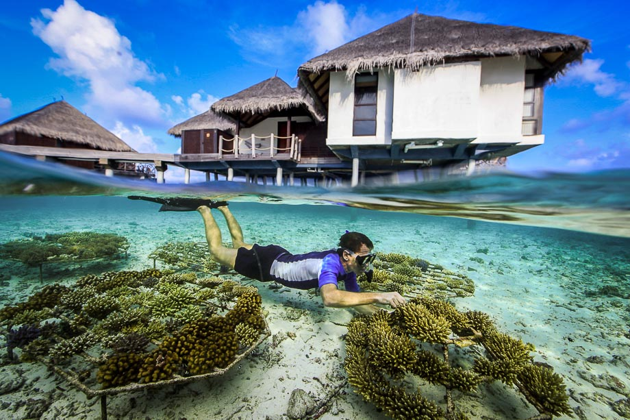 Coral frames at the water bungalows