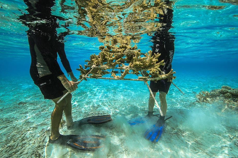 Reefscapers coral experts at Four Seasons Resorts Maldives