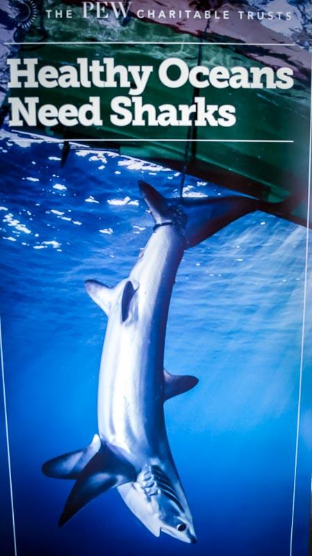 Pew Posters (1) (shark symposium, Maldives)