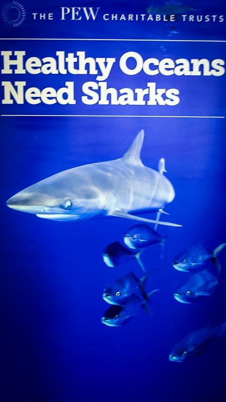 Pew Posters (2) (shark symposium, Maldives)