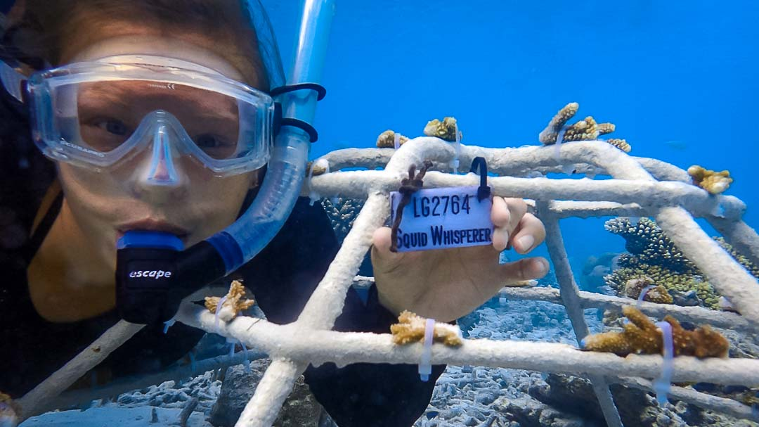 Lauren's blog - marine biology volunteer with Seamarc Maldives - Reefscapers coral frame - squid whisperer