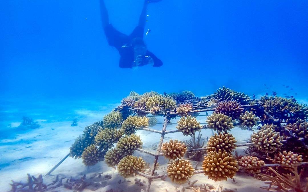 Lauren's Marine Biology Blog